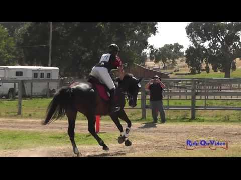 173XC Anissa Fernandez On Daleno JR Intro Cross Country Shepherd Ranch June 2016