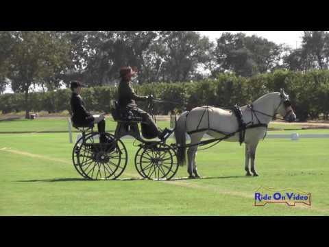 003D Leslie Berndl Advanced Single Pony Dressage Shady Oaks September 2016