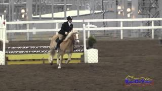 188S Connie Arthur on Mr. Harry Buckley SR Beginner Novice Show Jumping FCHP November 2014