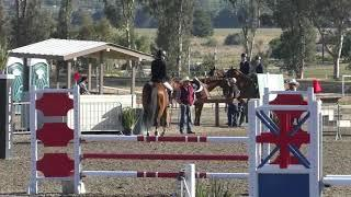 NEE Premier Jumper 1 Classes 225 & 271 1.00M Jumpers & Low Child Adult Jumper 1 00M April 2019