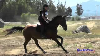 112XC Alexandra Terlesky On Weltina JR Training Cross Country Copper Meadows Sept. 2015
