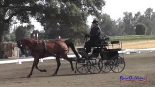 19D Teresa Jump Training Single Horse Dressage Sargent Equestrian CDE August 2014