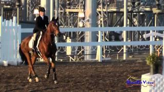 079S Taylor Easley on Chocolate Rocketman Intro Show Jumping FCHP November 2014