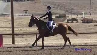 151S Jadyn Gooch on Boolagh Brigadier JR Novice Show Jumping Twin Rivers Ranch Nov. 2020