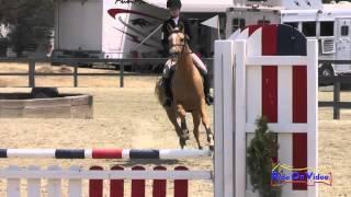 292S Katie Dillon On The Sundance Kid JR Beginner Novice Show Jumping Woodside August 2015
