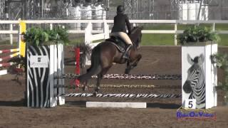 203S Kathryn Canario on Ringwood Little Imp JR Novice Show Jumping FCHP February 2015