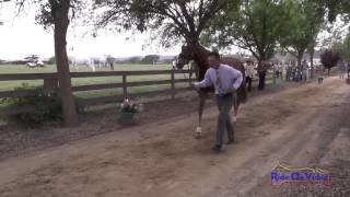 001J1 Matthew Brown on Super Socks BCF CIC 3* Jog 1 Twin Rivers Ranch April 2014