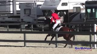 022S James Atkinson on Gustav CIC2* Show Jumping Woodside Int'l Event Oct 2014