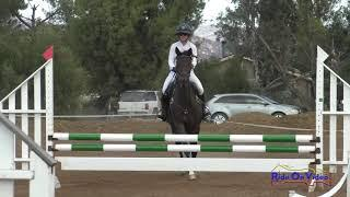 109S Chloe Smyth on Andromache Open Beginner Novice Show Jumping Copper Meadows September 2020