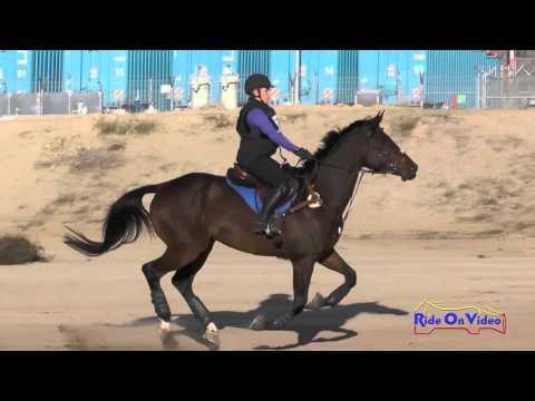 014XC Anna Nowak On Double Click Open Preliminary Cross Country FCHP November 2015