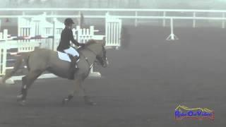 016S Tinsley Cohen on Moyglare Clover Beginner Novice Show Jumping Round 1 FCHP January 2015