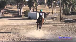 173XC Jazmin Holguin on Winter's Fable Intro Cross Country Fresno County Horse Park Oct 2014
