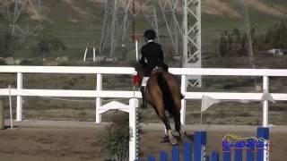 122S Deborah Rosen on Sunsprite Belissima Open Novice Show Jumping FCHP November 2014