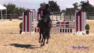 354S Ashleigh Guich SR Training Amateur Show Jumping Woodside August 2013