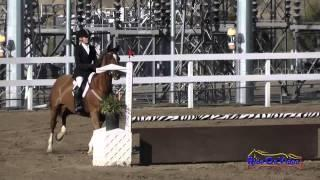 097S Susan Davies on Debutante SR Novice Show Jumping FCHP November 2014