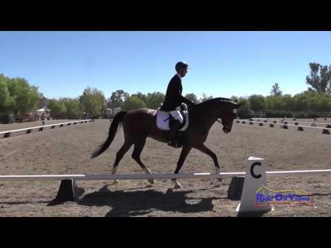 115D Matthias Schwarz On Kortesyde Open Novice Dressage Copper Meadows Sept. 2016
