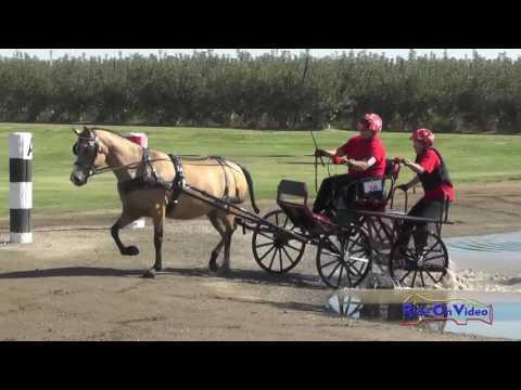 038M Merrie Morgan Preliminary Single Pony Marathon Shady Oaks September 2016