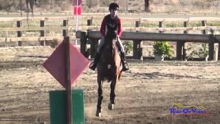 074XC Tommy Greengard on Colonial Art JR Training Rider Cross Country Galway Downs Jan 2014
