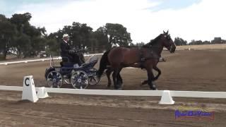 28D Owen Perron Training Pair Horse Dressage Sargent Equestrian CDE August 2014