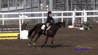 135S Lauren Jamison on Formula One Open Beginner Novice Show Jumping FCHP November 2014