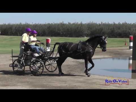 055M Melissa Tozzi Training Single Pony Marathon Shady Oaks September 2016