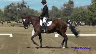 149D Domenic Arrabit on Quiet Council JR Novice Dressage Twin Rivers Ranch September 2017