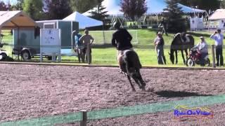 260S Michael Larsen on J. Finnegan SR Training Show Jumping The Event at Rebecca Farm July 2014