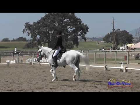 194D Logan Saylor On Prince In Kentucky JR Beginner Novice Dressage Shepherd Ranch Aug. 2016