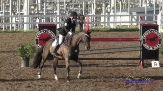 001S Matthew Brown on Happenstance CIC2* Show Jumping FCHP February 2015