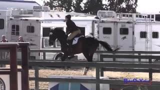 098S Lauren Rath on Syntax SR Training Amateur Show Jumping Woodside August 2014