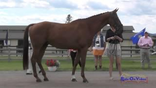 221J2 Katelyn Grubich On Kaptain Jak Training 3-Day FEI Jog 2 The Event At Rebecca Farm July 2015