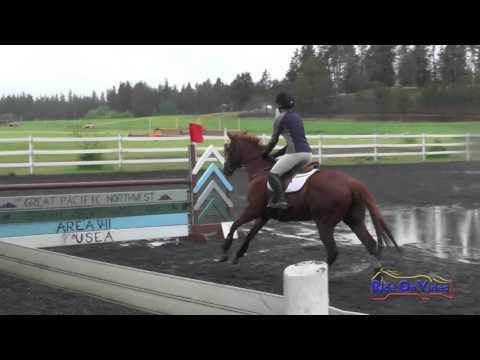 293S Rita Nedrow JR/YR Preliminary Show Jumping Spokane Sport Horse HT May 2016