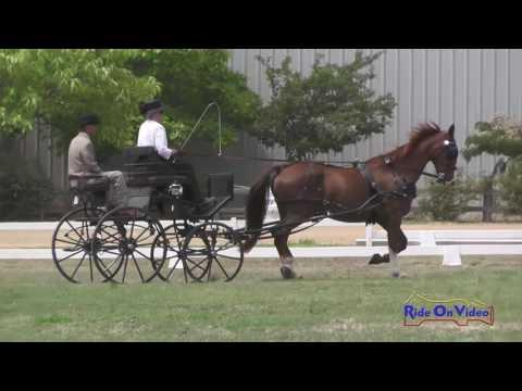 038D Melinda Takeuchi Preliminary Single Horse Dressage Clay Station CDE June 2016