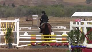 194S Cindy Ramirez Smith on Carina HGF SR Novice Show Jumping Twin Rivers Ranch Sept 2014