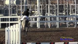 202S Kristy Kropat on Hues of Huxley Intro Show Jumping FCHP November 2014