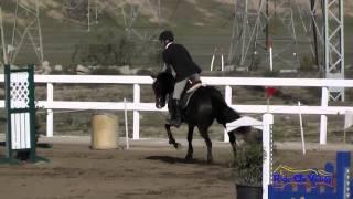 110S Joseph McKinley on Storm Dragon Open Novice Show Jumping FCHP November 2014