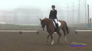 070D Mattea Curtis on Around the World Open Training Dressage FCHP January 2015