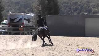 133S James Alliston on Sunsprite Madeira Training Horse Show Jumping Woodside August 2014