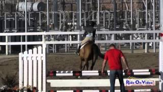 094S Ainsley Faraday on Coeur Das SR Novice Show Jumping FCHP November 2014