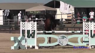 028S Lauren Billys on Castle Larchfield Purdy CIC2* Show Jumping Woodside Int'l Event Oct 2014
