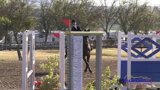 409S Jadyn Gooch on Marmaduke JR Beginner Novice Show Jumping Twin Rivers Ranch 2019