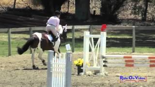 281S Carole Lieberman On Gimli Intro Show Jumping Shepherd Ranch June 2015