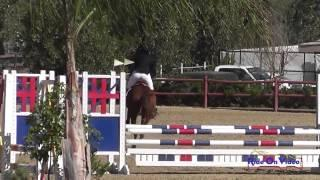 269S Lorie Haynes on High Hopes Novice Rider Show Jumping Copper Meadows September 2014