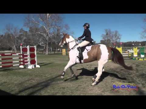 019S Nikki Ayers On Rubicon Intermediate Show Jumping Galway Downs Feb 2016