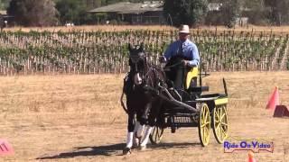 04C Drew Callahan Preliminary Single Horse Cones Sargent Equestrian CDE August 2014
