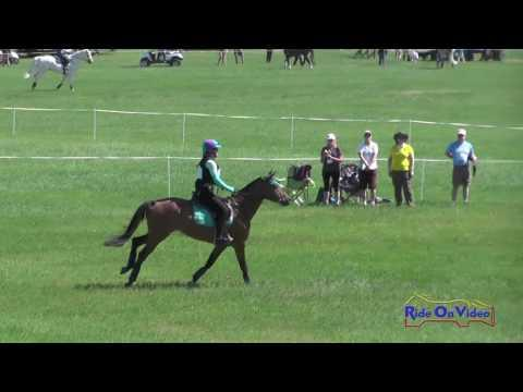 077XC Aimee Walters On Fancy Cami Open Novice Cross Country Colorado Horse Park June 2016