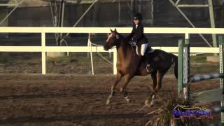 213S Kate Hovland on Sir Thomas Intro Show Jumping FCHP November 2014