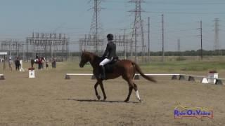 114D Jessica Saksen on Happy Deisy SR Beginner Novice Dressage FCHP April 2017