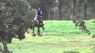 Tayler on Phil Copper Meadows Schooling Show February 2015