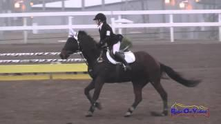 149S Ashley Buck on Bellagio JR Beginner Novice Show Jumping FCHP November 2014